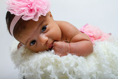 Baby's first photoshoot. Royalty Free Stock Photos