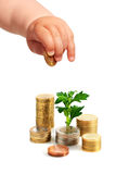 Baby's hand, coins and plant. Royalty Free Stock Images
