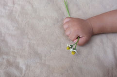 Baby's hand holding a flower Stock Images