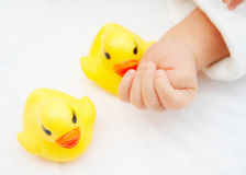 Baby's hands and duck toys. Hands of a one day newborn baby and two duck toys royalty free stock photos