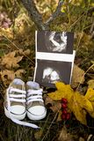 A baby`s ultrasound and shoes. A baby`s ultrasound and baby shoes placed on autumn leaves Stock Images