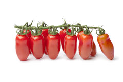Baby San Marzano's tomatoes on a vine Stock Images