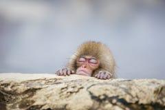 Baby-Schnee-Affe schlafend im Dampf Stockfotografie