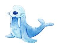 Baby sea lion Stock Photos