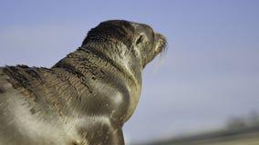 Baby Sea Lion / Seal Royalty Free Stock Photo