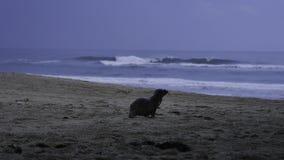 Baby Sea Lion / Seal Stock Image