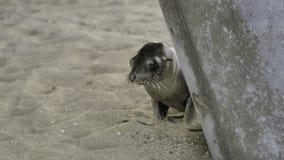 Baby Sea Lion / Seal Stock Photos