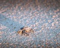Baby sea turle stock photo