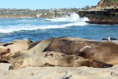 Baby seal sleeping Stock Photo