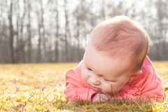 Baby searching for blades of grass Royalty Free Stock Photography