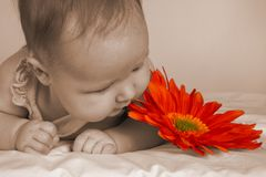Baby Sepia Flower. A baby girl lying on her stomach next to a flower Stock Image