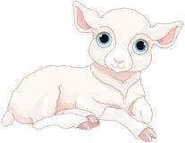 Baby sheep Royalty Free Stock Photography