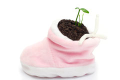 Baby shoe with sprout Stock Image