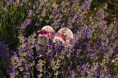 Baby shoes in lavender field. Baby girl shoes in lavender field stock photo