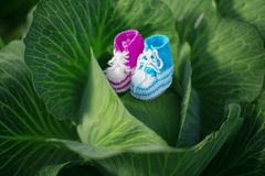 Baby shoes. Newborn, kid art. Beauty child shoes in cabbage. Boy Stock Photo