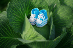 Baby shoes. Newborn, kid art. Beauty child shoes in cabbage. Boy Stock Photography