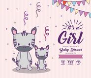 Baby shower design. Baby shower invitation with its a girl concept with cute zebras over purple background, colorful design. vector illustration Stock Photos