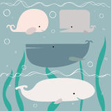 Baby shower whales Royalty Free Stock Photos