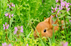 Baby shy bunny sitting in spring grass Royalty Free Stock Photo