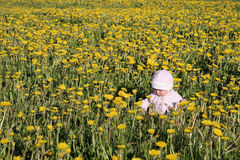 Baby siting at dandelions meadow. Baby siting at spring dandelions meadow Royalty Free Stock Images