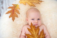The baby sits in a chair Stock Image