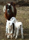 Baby-sitter e miúdos imagem de stock royalty free