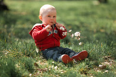 Baby is sitting on grass and gnawing flowering branch of apricot. Tree. He holds twig in his hands and bites it Royalty Free Stock Photo