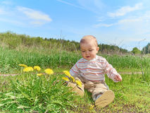 Baby sitting on a green meadow with yellow flowers dandelions Royalty Free Stock Photo
