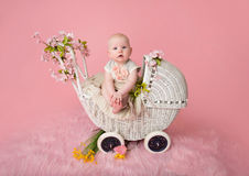 Baby Sitting in Stroller Royalty Free Stock Images