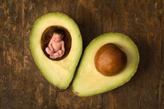 Baby sleeping in open avocado stock photos