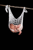 Baby sleeping in string hammock Royalty Free Stock Photo