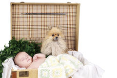 Baby sleeping in a suitcase with dog Stock Images