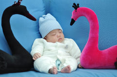 Baby sleeping by two swan Royalty Free Stock Image