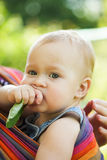 Baby in sling Stock Photography