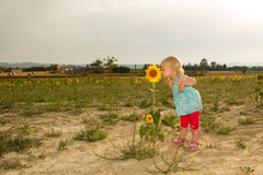 Baby smelling sunflower Stock Photos
