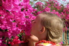 Baby smells flowers. Of bougainvillea Royalty Free Stock Photo