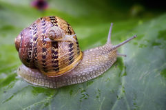 Baby snail. First look to the new world with his mother Stock Photos