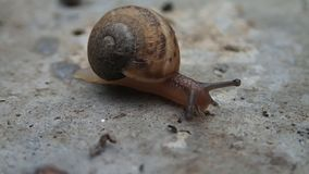Baby snail moving Royalty Free Stock Photography