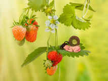 Baby snail on strawberry plant. Cute newborn baby in snail outfit sleeping on a strawberry plant royalty free stock image