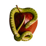 Baby snake on apple Royalty Free Stock Photography