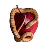 Baby snake on apple Royalty Free Stock Images