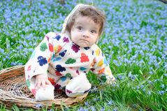 Baby snowdrops field sit Stock Photography