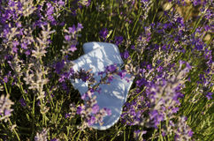 Baby socks in lavender field. Baby boy blue socks in lavender field stock photos