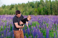 Baby son with dad in lupine field Stock Photos