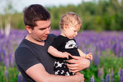 Baby son with dad in lupine field Stock Photography