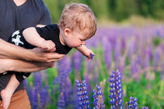 Baby son with dad in lupine field. With trees on background Royalty Free Stock Photography