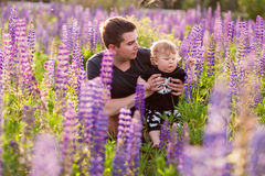 Baby son with dad in lupine field Royalty Free Stock Image