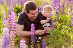 Baby son with dad in lupine field. With trees on background Royalty Free Stock Photos