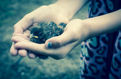 Baby Sparrow. A young girls cradles a baby sparrow Stock Images