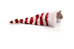 Baby sphynx cat in xmas hat Royalty Free Stock Photos